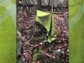 Wayfinding_lichen
